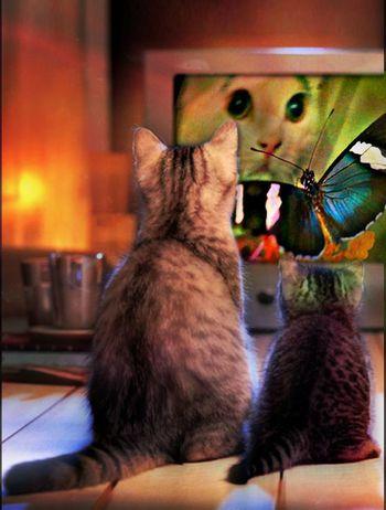 I Want Ginger's Book! Streamzoo Family EyeEm Best Shots Eye Em Nature Lover