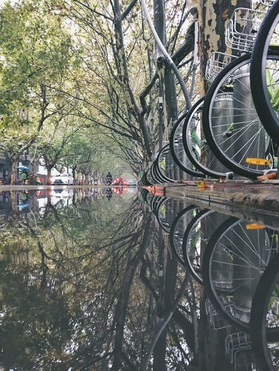 Tree Transportation Outdoors Day Nature No People Framed Waterfront Reflection Wheel Mirrored Bicycle Rainy Days Beautifully Organized
