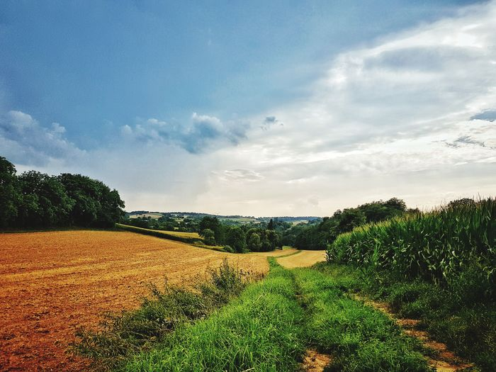 Field Farmland