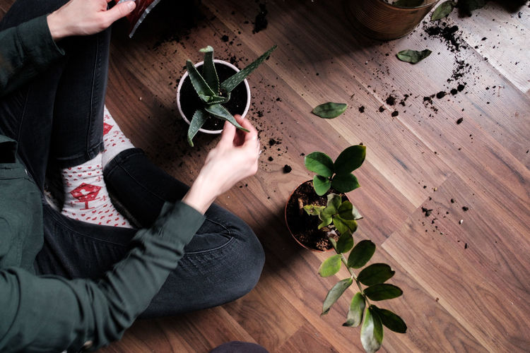 High angle view of hand holding potted plant on wooden table