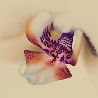 Flower Flowering Plant Petal Close-up Vulnerability  Fragility Beauty In Nature Inflorescence Flower Head Plant Freshness Nature Pollen Indoors  Growth Selective Focus No People Orchid Softness