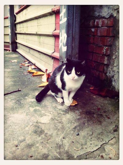 路邊遇到的黑白貓~ Cat