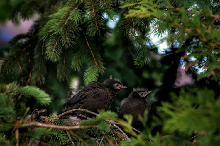 Baby birds waiting to be fed Outdoors Backyard Photography Nature Beauty In Nature Light And Shadow Sunny Day Animal Themes Ontario, Canada Tree Forest Bird Branch Close-up Needle - Plant Part Tree Area The Great Outdoors - 2018 EyeEm Awards 50 Ways Of Seeing: Gratitude
