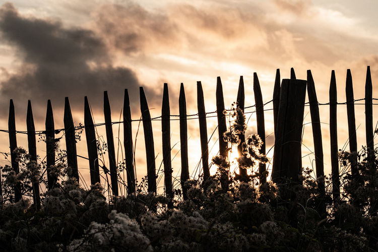 Silhouette plants on wooden fence against sky during sunset