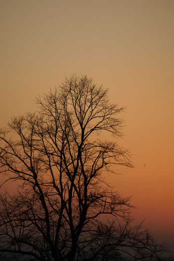 Sunset Tree Branch Nature Beauty In Nature Silhouette Bare Tree Sky Dramatic Sky Tranquility Orange Sky Perspectives On Nature Capture Tomorrow