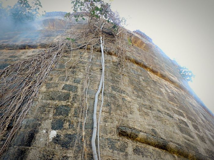 Fortress Wall Vasai Incredible India Indiapictures Taking Photos Castle Walls Castle View  Castle Ruin Fort Wall French Build Fort Finding Life In Walls