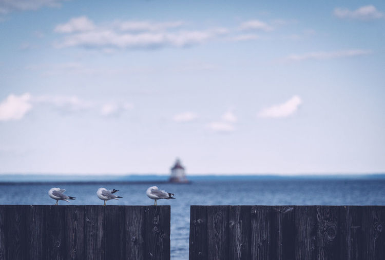 Seagulls grooming on wooden fence against sky