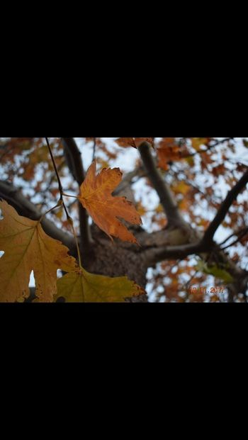 Autumn Leaf Change Nature Beauty In Nature Tree No People Outdoors Scenics Day Maple Tree Branch Maple Leaf Tranquility Growth Fragility Maple Close-up Freshness