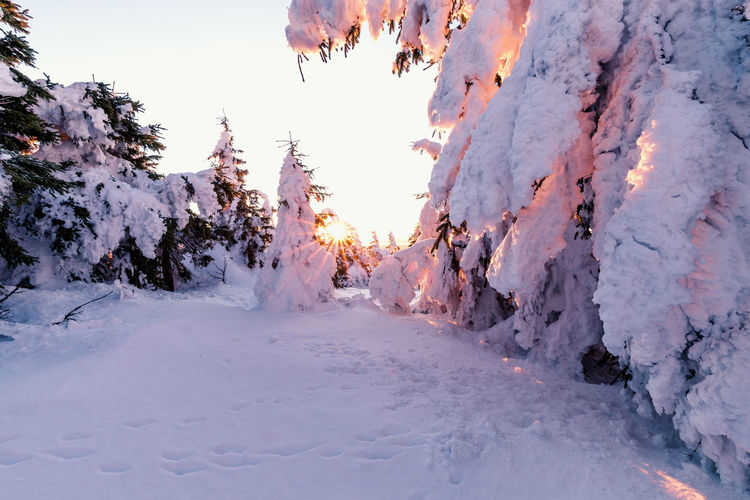 Winter Cold Temperature Snow Beauty In Nature Covering Nature No People Sky Scenics - Nature Tranquility Frozen White Color Tree Tranquil Scene Plant Environment Deep Snow Day Landscape Snowcapped Mountain Harz Harzmountains Brocken