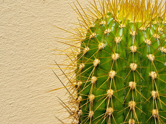 High angle view of cactus plant