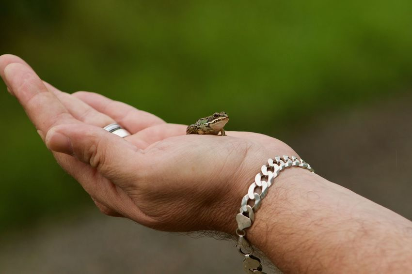 Babyfrog Frog Babyfrog EyeEm Best Shots Stockach Human Hand Hand Human Body Part One Animal Animal Wildlife One Person Lizard Body Part Animals In The Wild Reptile Invertebrate Focus On Foreground Holding Finger Close-up Day Insect Small Human Limb Care
