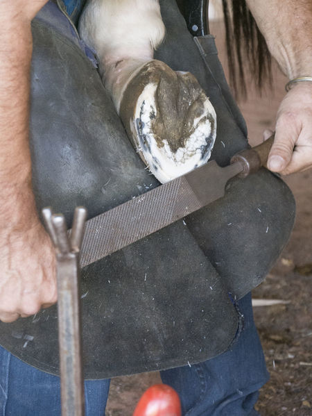 Barn Foot Horses Horseshoe Ranch Shave Work Work Flow Working Working Hard Workshop Craft Craftsmanship  Farrier Focus On Details Focus On Foreground Hand Handmade Hardwork Horse Rasp Tool Tools Work Tool