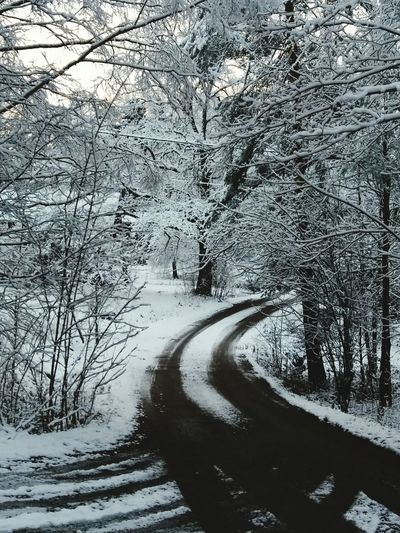 Small Road Winter Snow Cold Temperature Nature Tree Outdoors Day No People Tranquility Bare Tree Beauty In Nature Road Scenics Landscape Forest Sky EyeEm Ready   The Great Outdoors - 2018 EyeEm Awards