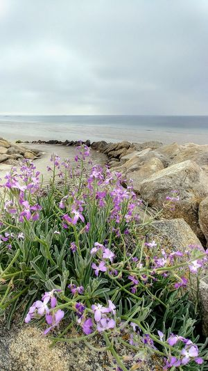 Cleut-Rouz Rocks And Water Bretagne Flower Water Sea Beach Sand Summer Uncultivated Idyllic Low Tide Coastal Feature Sand Dune