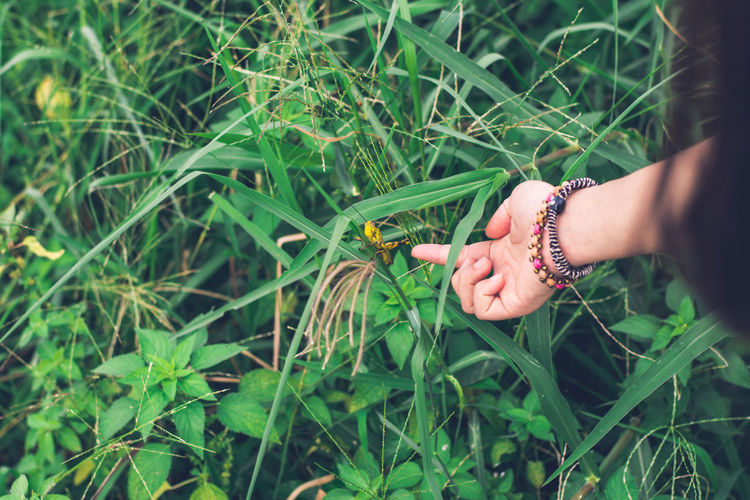 Girl's hand trying to touch Shorthorned Grasshopper (Valanga nigricornis) sitting on tree in urban park Sitting Touch Tree Backgrounds Field Garden Girl Grasshopper Green Color Growth Hand Human Hand Nature One Person Outdoors Park Plant Valanga Nigricornis Wallpaper Women Yellow