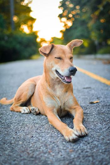 Dog sitting on road