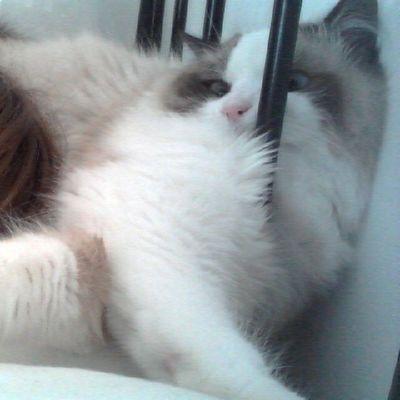A esto se le llama estar entre la cama y la pared Srenrique Gatolicismo Gato Gat cat cama bed wakeup despertar love instacat