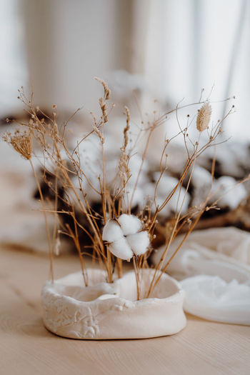 Close-up of white dried flowers on table