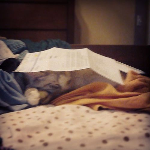 All warmed up sleeping under a couple sheets of paper lol Sleepybaby Angel Silly Kitten cat cute instakitty adorable