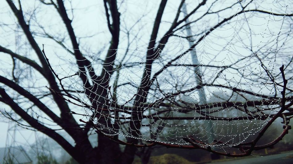 SpiderWeb Winter Cold Temperature Snow Beauty In Nature Outdoors Spiderweb In Morning Dew Spider Web Spider Dew Drops Dew Rain Drops Rain Tree Sky Day Branch Nature Walking Morning PhotographyCold Photographer Pretty Emo Otaku
