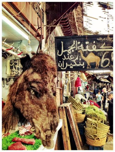 Camel Old Market Souks Up Close Street Photography Butcher Morocco Fes