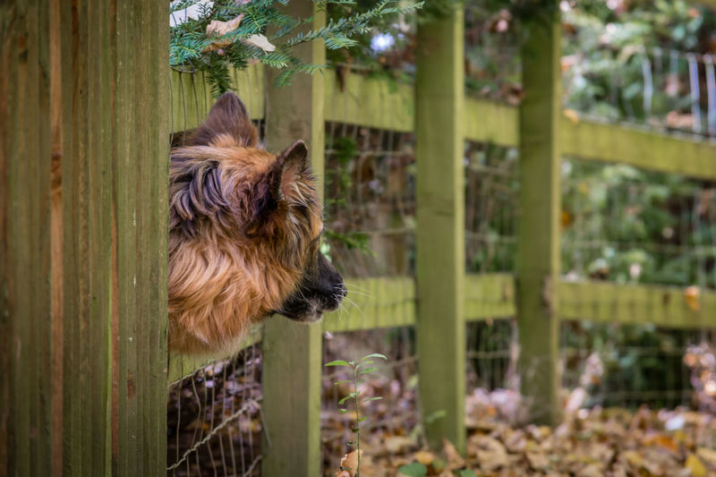 Close-up of cat by fence