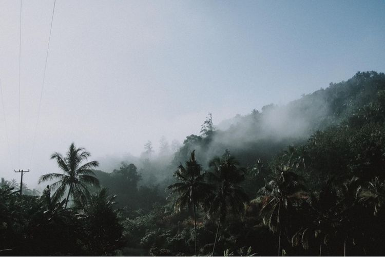 Tanah Datar, 2018 Tree Plant Sky Fog Growth Tranquility Beauty In Nature Tranquil Scene No People Nature Scenics - Nature Day Environment Non-urban Scene Outdoors Land Idyllic Forest Climate Hazy  My Best Travel Photo