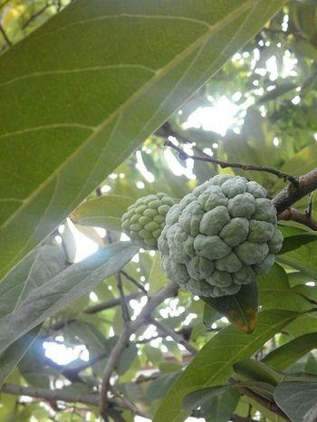 Color Palette Fruit Srikaya Green Fruit 🍏 Green Fruit Allgreen Green Green Green!