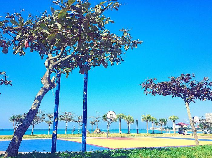 安良波公園 アラハビーチ 沖縄 Okinawa OKINAWA, JAPAN Basketball Court Basketballcourt Basketball Hoop Sky Trees Blue Sky Bluesky Araha Beach Bluesea
