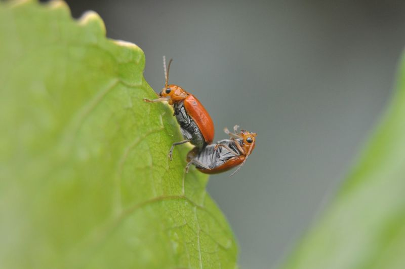 Bugs Bugs Bugs Life Nature Nature_collection Nature Photography Green Life