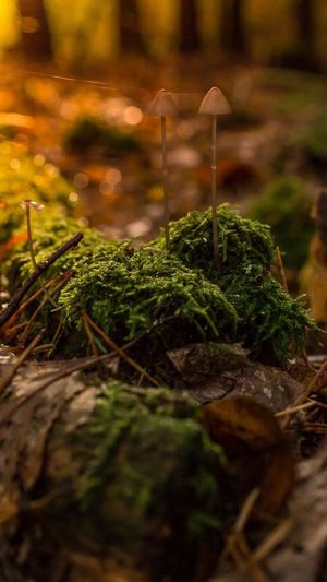 Kindness and awareness work together. Through awareness we understand the underlying beauty of everything and every being. Nature Growth Beauty In Nature Mushrooms Close-up Mushroom_pictures Mushroomphotography Fragility Leaf Moss Creative Light And Shadow Goldenoctober October Sweet October!