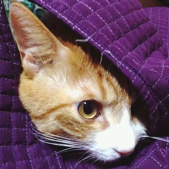 기여버.. 기여버 주금😆😆😆😆 Yellowcat Sooooooo Cute