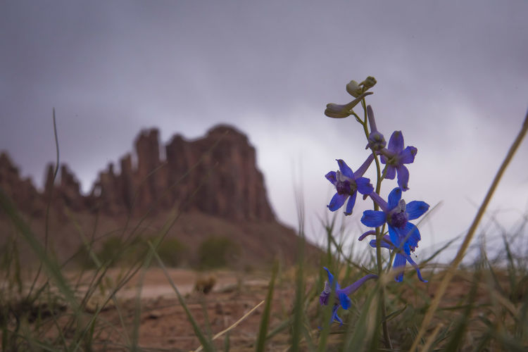 Cloudy Desert Grass Rain Utah Close-up Desert Flower Indian Creek