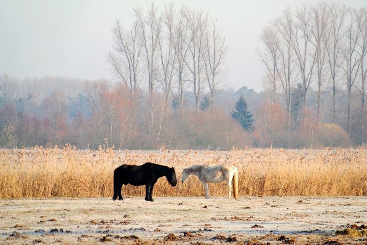frozen world - close to you Nature Photography Nature_collection My Point Of View Frozen Nature Frozen Beauty In Nature Cold Condition Cold Weather Hergershäuser Wiesen Close To You Animal Themes Pferde Horse Photography  Horses Tree Winter Cold Temperature Forest Sky