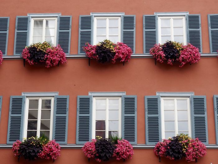 Low Angle View Of Plants On Windows Of Residential Building