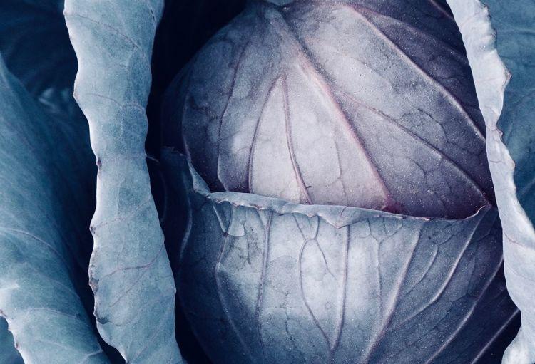 Full frame shot of cabbage