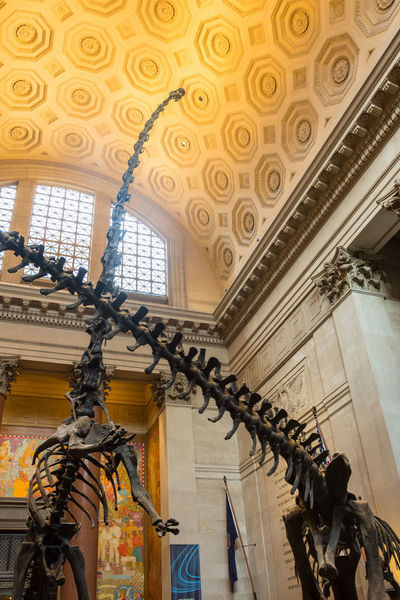 Usa Trip 2017 Last Summer Let's Go Explore New York New York City City Life Cityscape Travel Photography Destinations Ceiling Architecture Natural History Museum Dinosaurs Dinosaur Low Angle View Indoors  Skylight The Past History Skeletons Museum