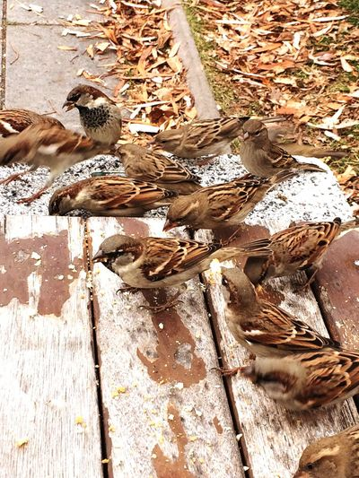 Birds hungry share cold and rain autumn