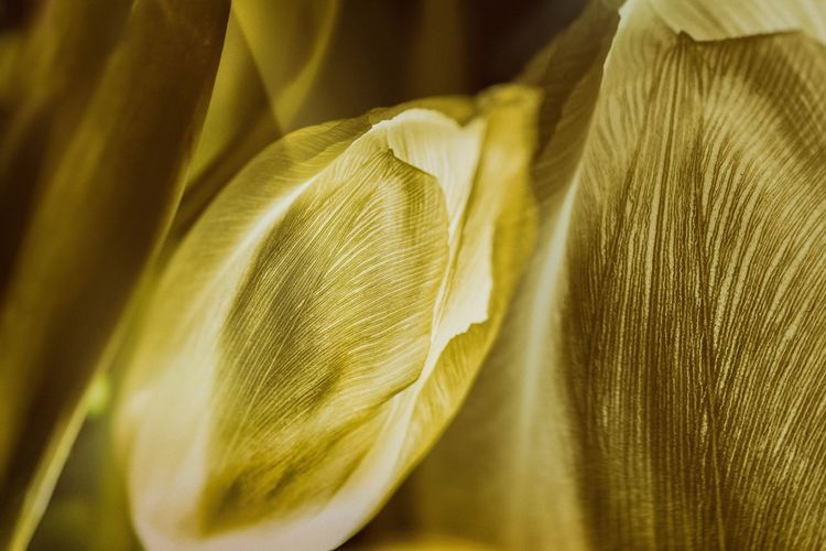 Backgrounds Full Frame Pattern Indoors  No People Crumpled Yellow Still Life EyeEmNewHere