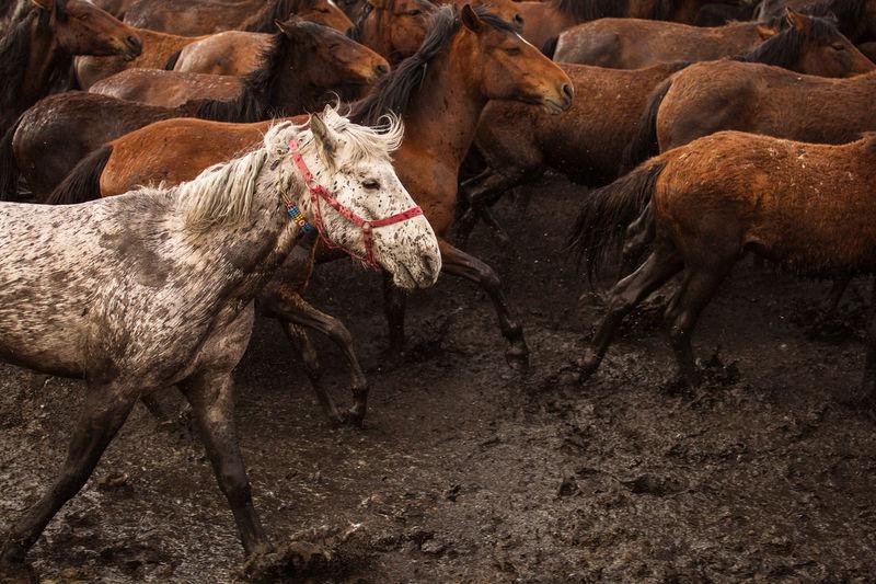 Full length of horse in land
