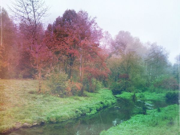 Misty morning Mexturesapp Eyem Nature Lover Landscape_Collection Streamzoofamily