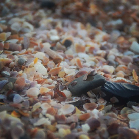 Little Things Close-up No People Animal Themes Vertical Indoors  Day Beach Travelphotography Travelingram Travel Photography Beachphotography Nature Outdoors Water Sunlight Pebbles And Sand Pebblebeach Pebblestones Shells♡ Salt Water World Black