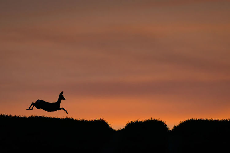 Silhouette of bird against sky at sunset