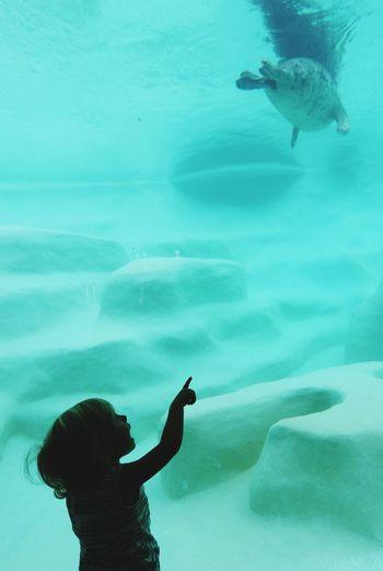 Silhouette girl pointing at animal swimming in aquarium