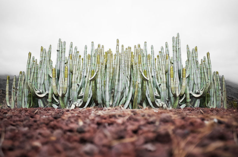 Cactus Earth