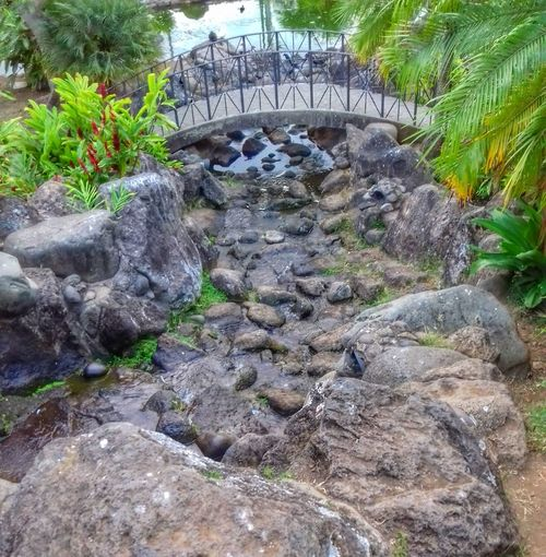 Day Outdoors Rock - Object No People Water Nature Plant Growth Tree Palm Tree