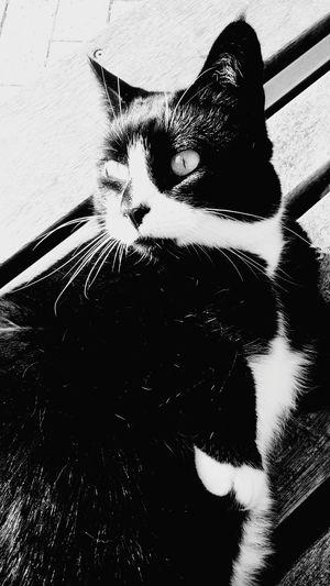 SITcat Pet Photography  Stressreliever