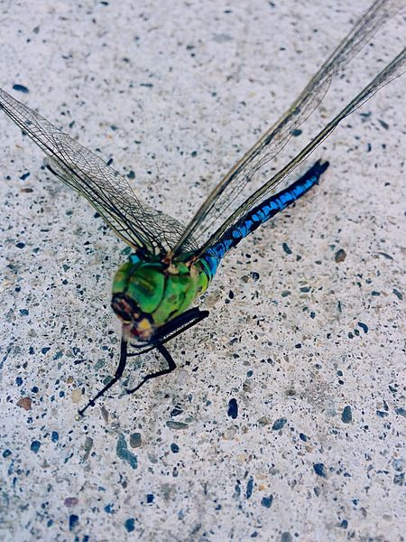 Dead Dragonfly over head 🌱