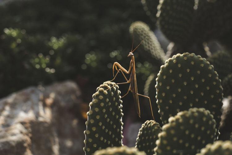 Close-up of grasshopper on cactus