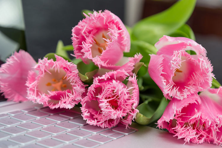 Close-up of pink flowers and laptop on table